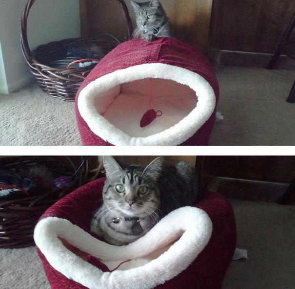 cat-logic-11
