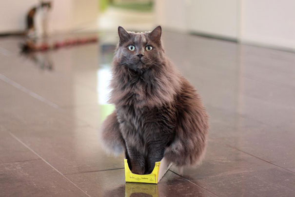 cat-logic-12