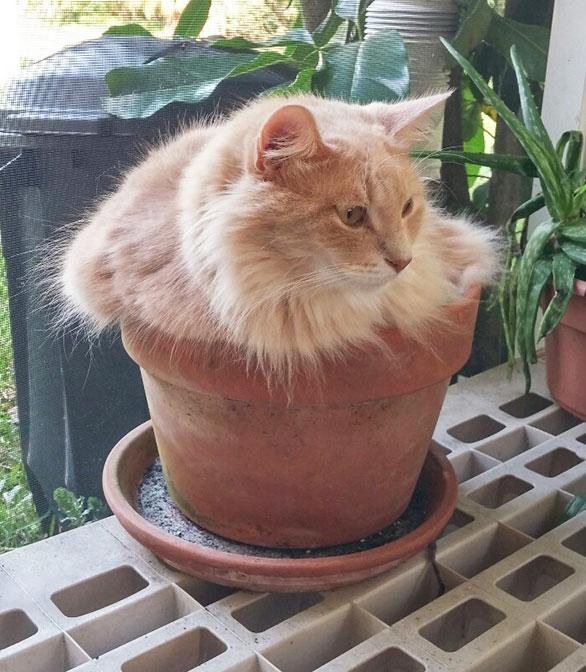 cat-plants-1