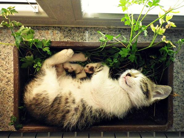 cat-plants-10