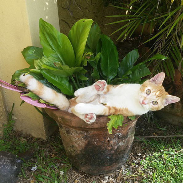 cat-plants-11