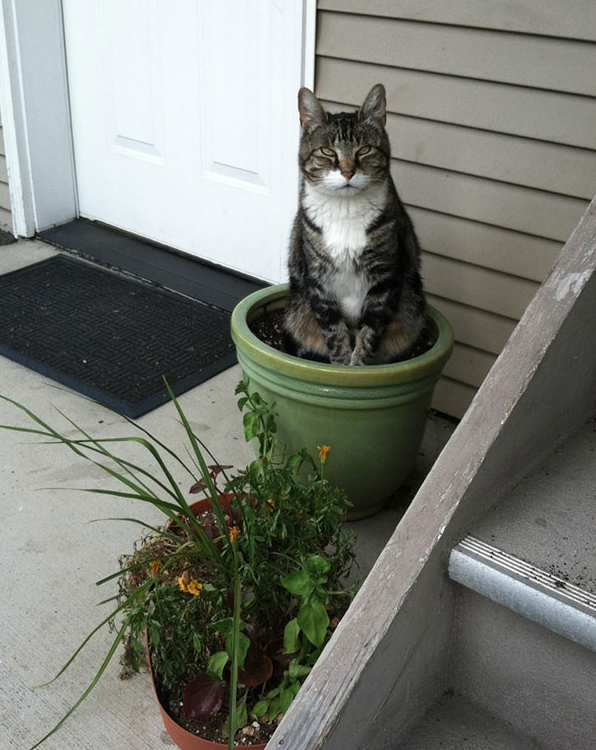 cat-plants-12