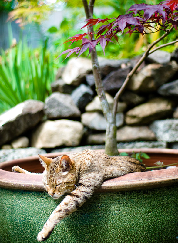 cat-plants-13