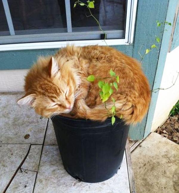 cat-plants-14