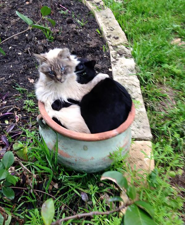 cat-plants-15