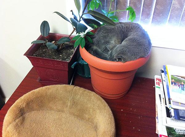 cat-plants-16