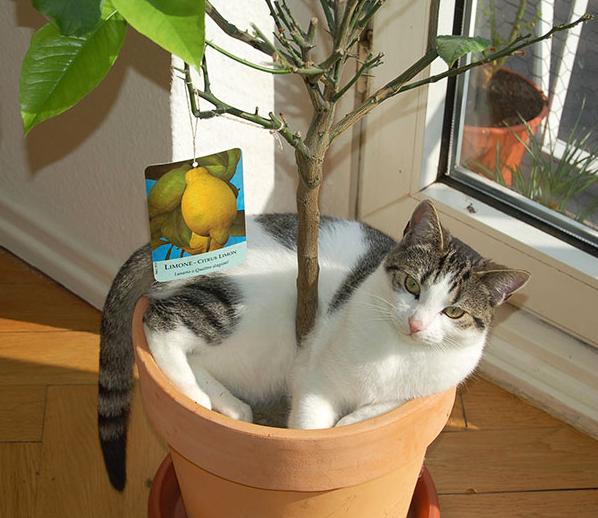 cat-plants-18