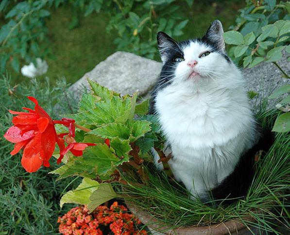 cat-plants-19