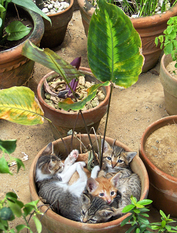 cat-plants-2