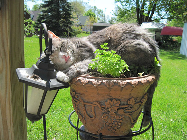 cat-plants-21