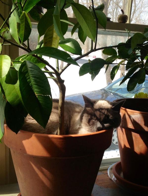 cat-plants-24
