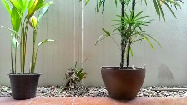 cat-plants-25