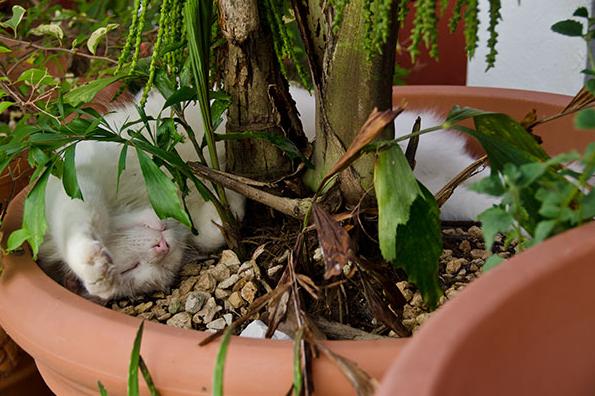 cat-plants-26
