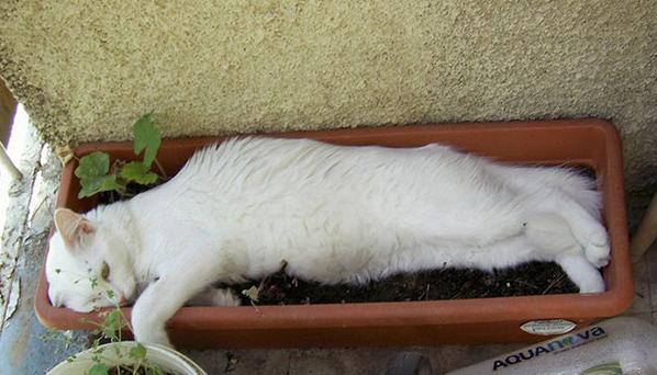 cat-plants-28