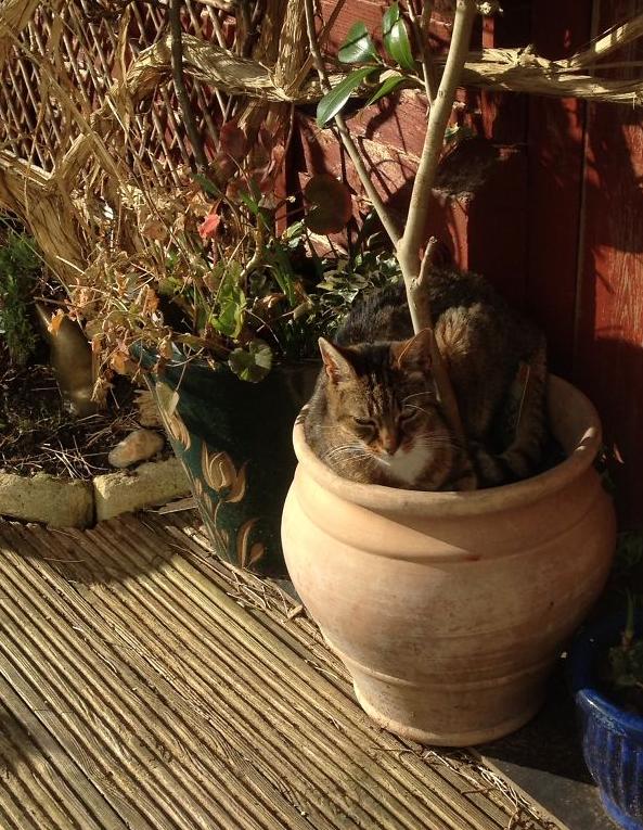 cat-plants-29