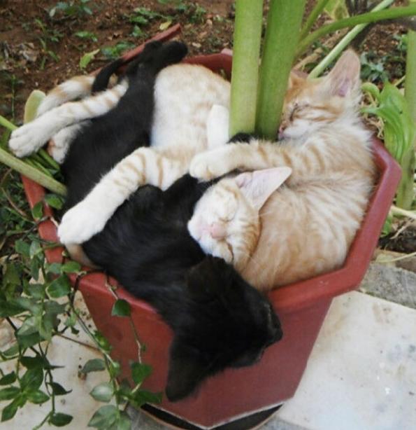 cat-plants-3