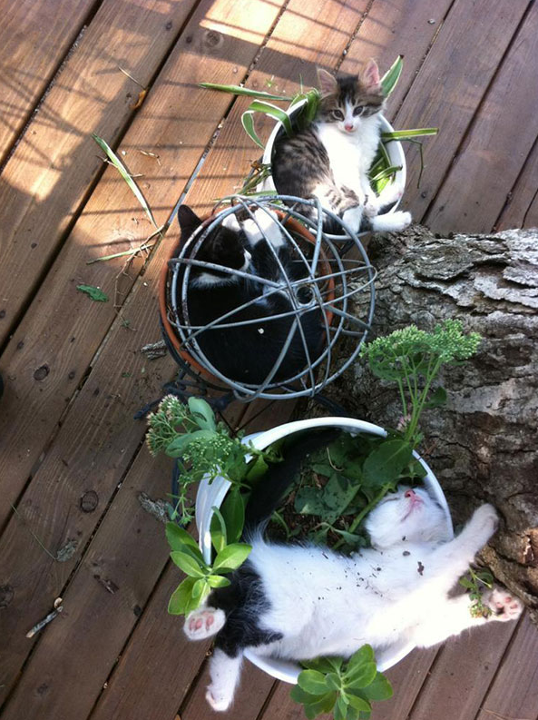 cat-plants-4
