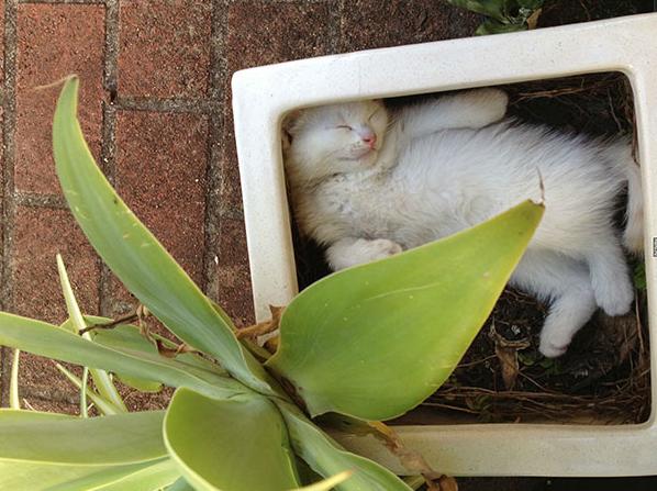 cat-plants-5