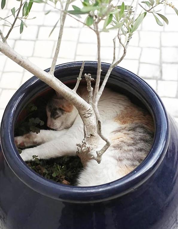 cat-plants-7