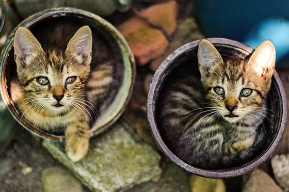 cat-plants-8