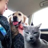 cat-reactions-15