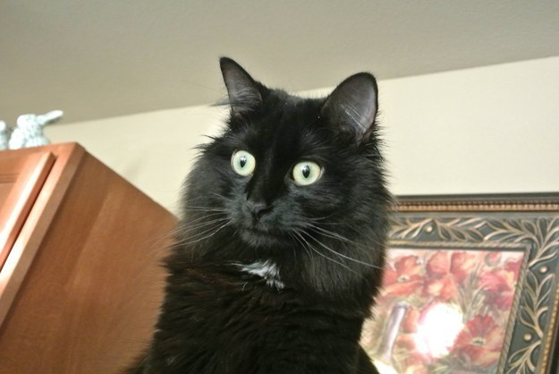 cat-reactions-16