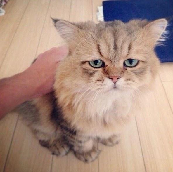 cat-reactions-17