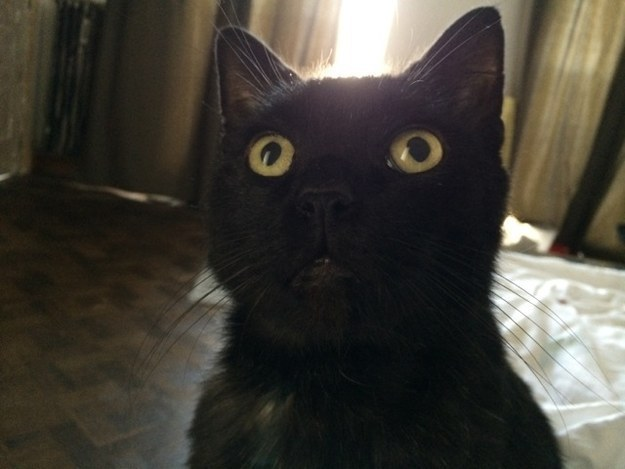 cat-reactions-21
