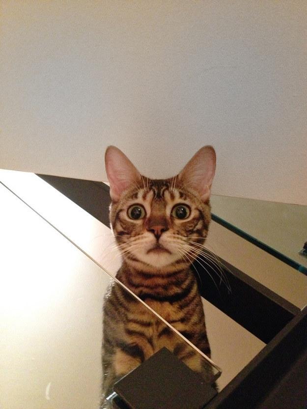 cat-reactions-24