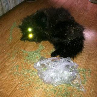 catnip-hell-2