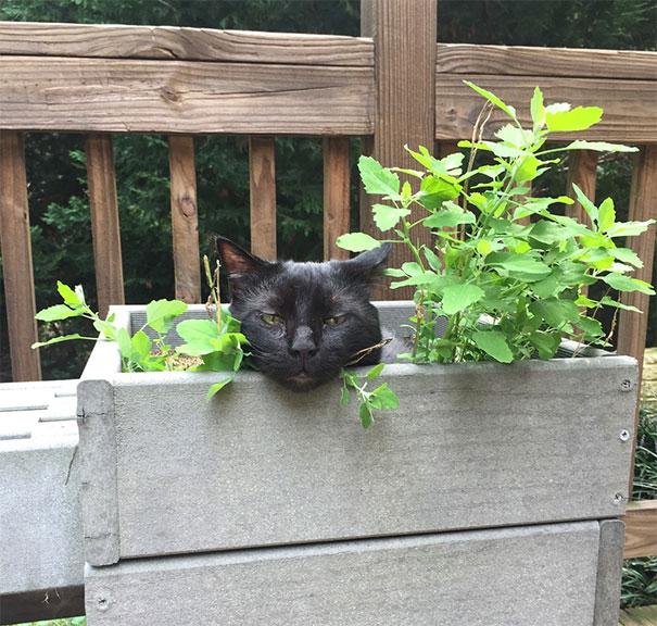 catnip-hell-22