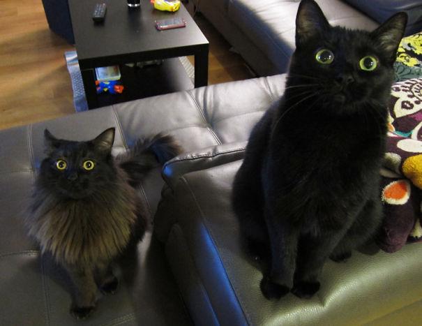 catnip-hell-31