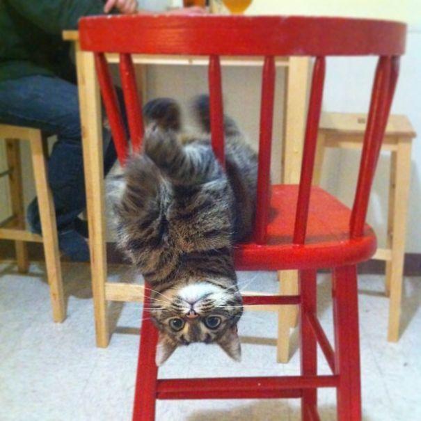 catnip-hell-34