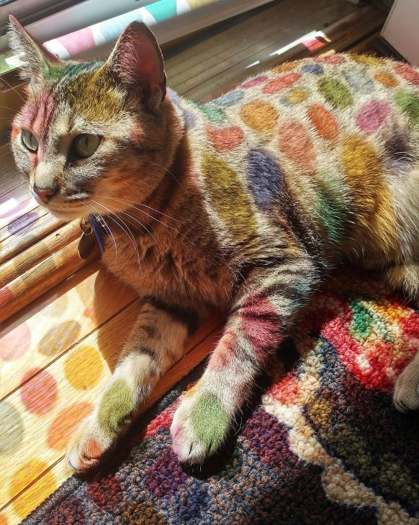 cats-love-sun-more-than-anything-11
