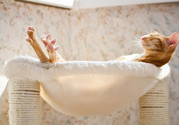 cats-love-sun-more-than-anything-12