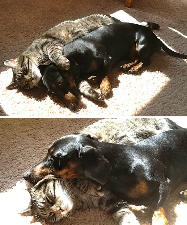 cats-love-sun-more-than-anything-14
