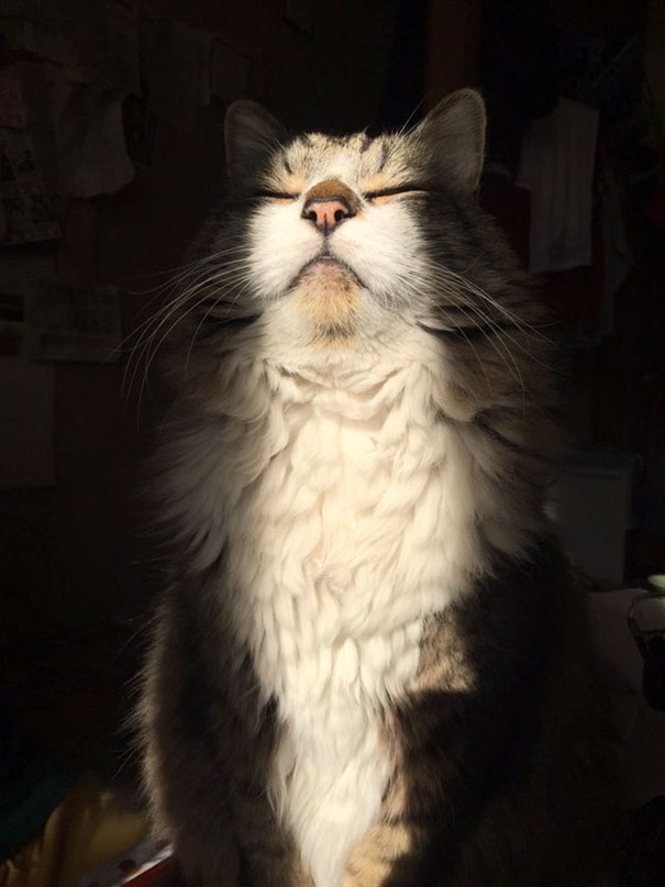 cats-love-sun-more-than-anything-17