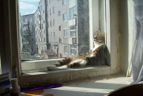 cats-love-sun-more-than-anything-18