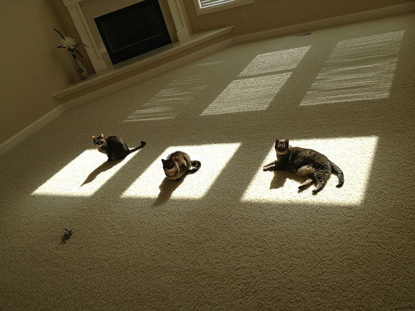 cats-love-sun-more-than-anything-19