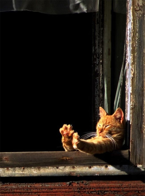 cats-love-sun-more-than-anything-22