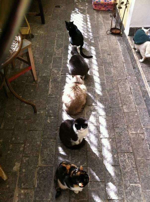 cats-love-sun-more-than-anything-24