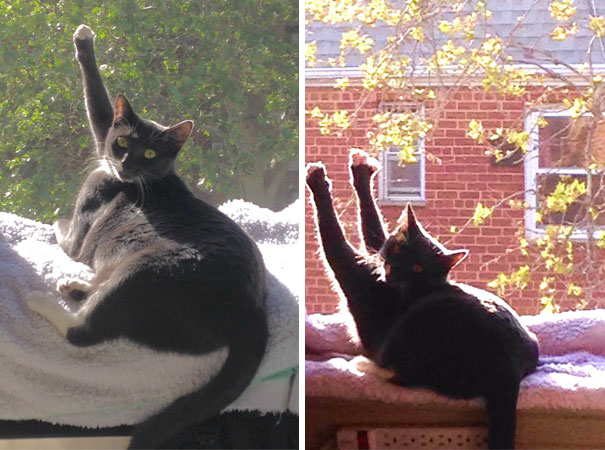 cats-love-sun-more-than-anything-27