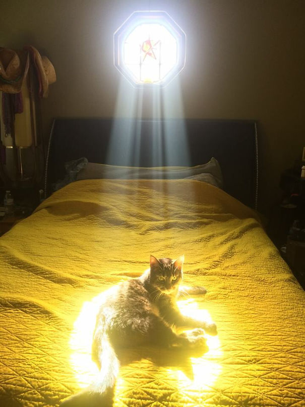 cats-love-sun-more-than-anything-3