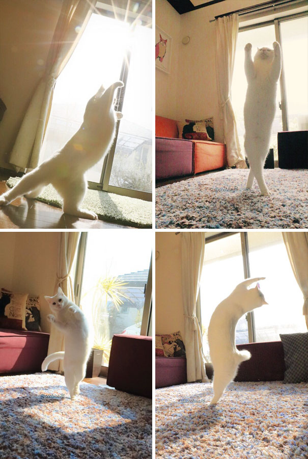 cats-love-sun-more-than-anything-4