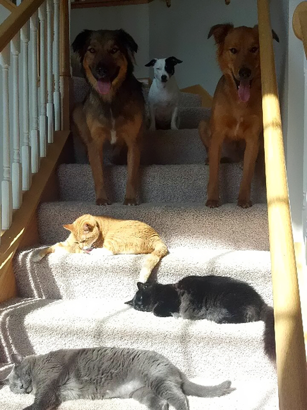 cats-love-sun-more-than-anything-9