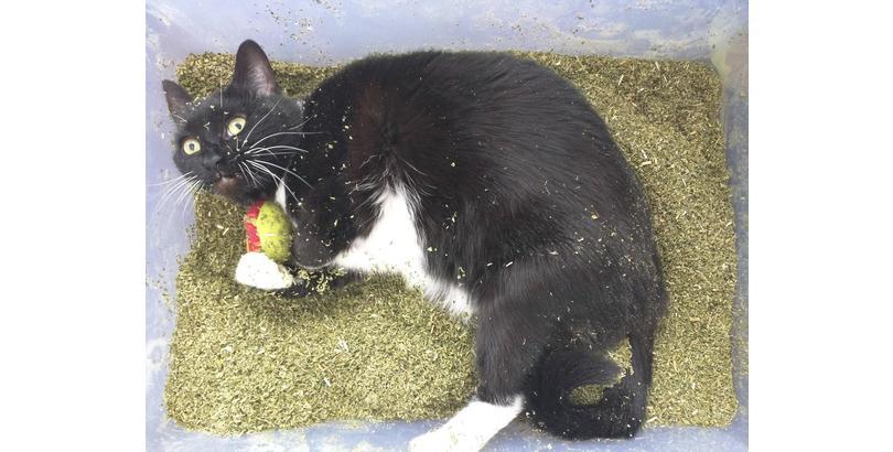 cats-on-nip-07