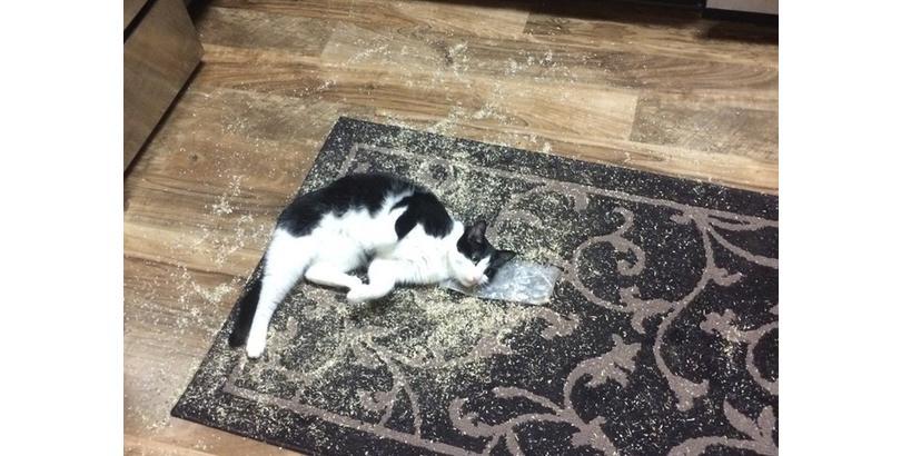 cats-on-nip-10