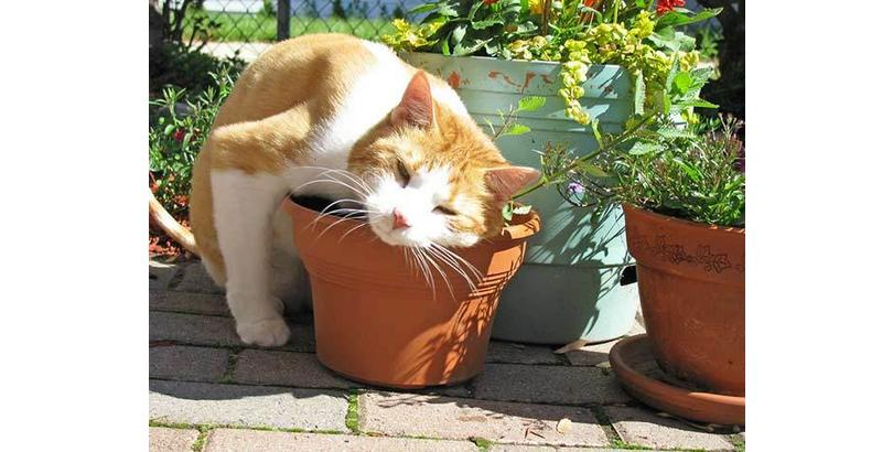 cats-on-nip-11