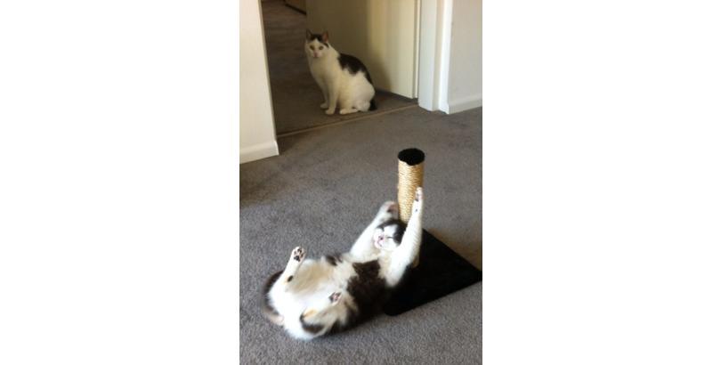 cats-on-nip-13
