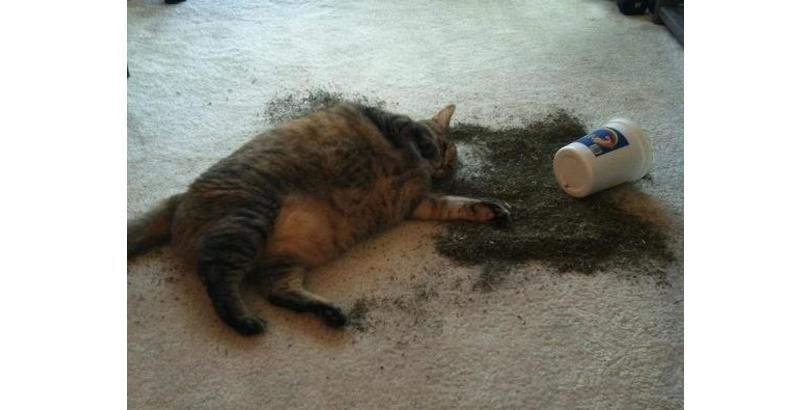 cats-on-nip-15